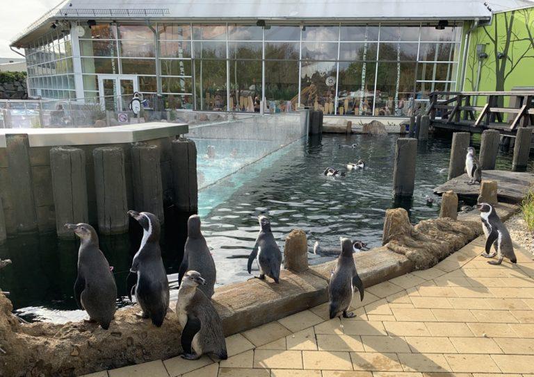 Spreewelten – Schwimmen mit den Pinguinen